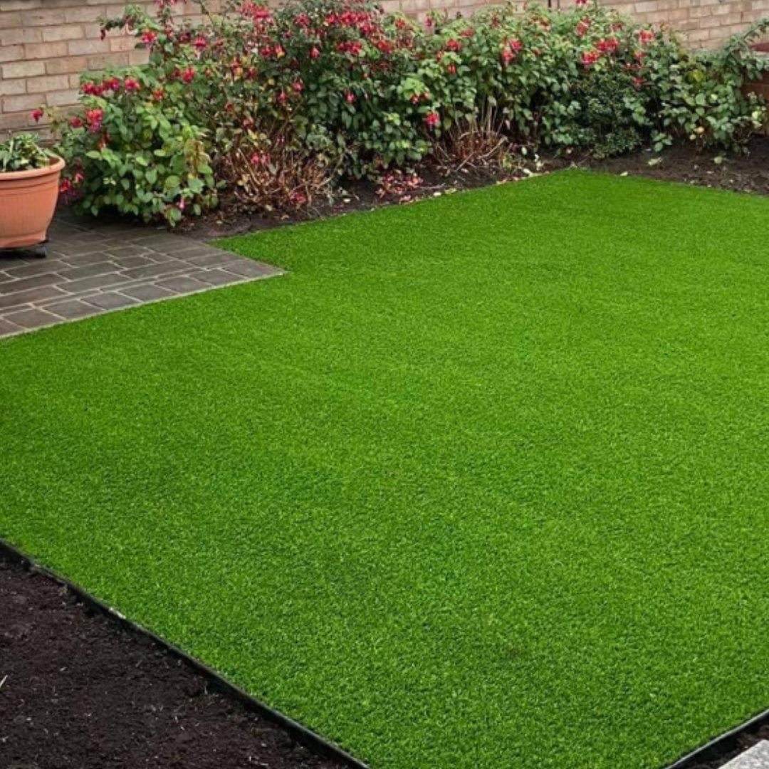 oasis 25 lawn grass